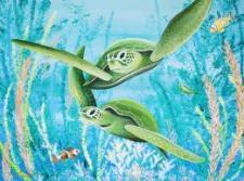 sea turtles 2