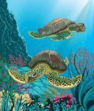 sea turtles 3