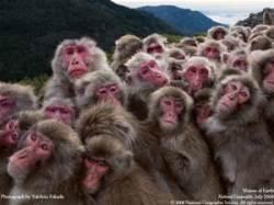 monkeys to the rescue