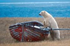 bears in boat